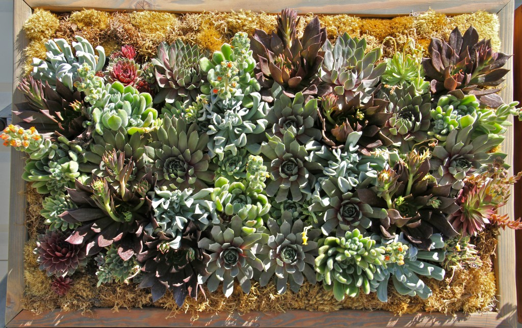 Love Gardening? Consider a Living Wall!